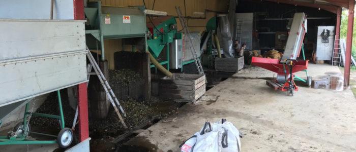 Notre chaîne de lavage et séchage des noix