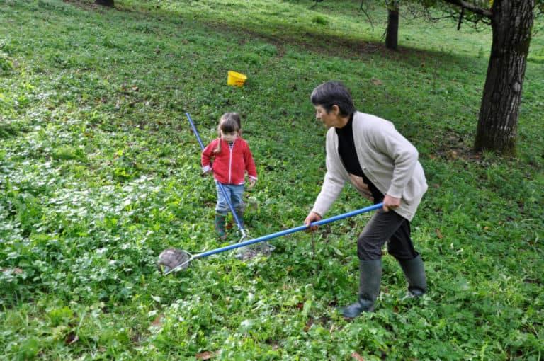 Transmission de savoir-faire pour ramasser la noix AOP du Périgord à la main dans les vergers du Moulin de la Vie Contée